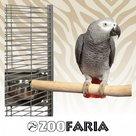 ZooFaria-Java-Single-Perch-Medium